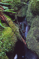 Moss Around Stream