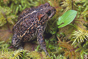Toad Side View