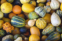 Mixed Gourds