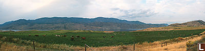 Lake Kamloops Panorama