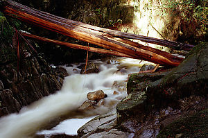 Wood Over River