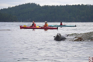 Kayaking Past Seal