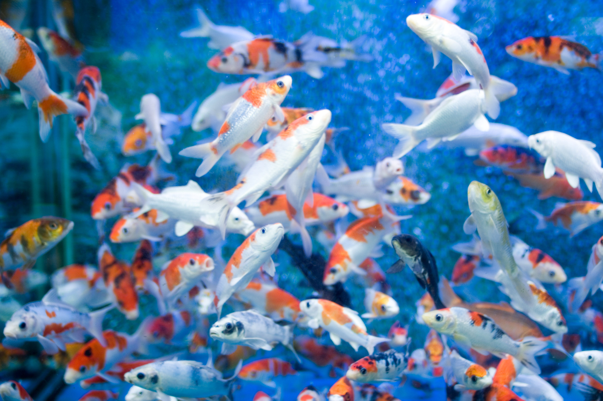 free moving fish backgrounds desktop