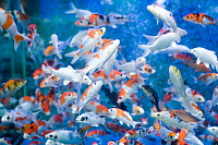 Fish In Large Tank