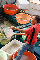 Selling Fish From Boat