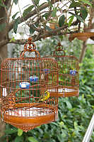 Cage With Bird Hanging In Trees