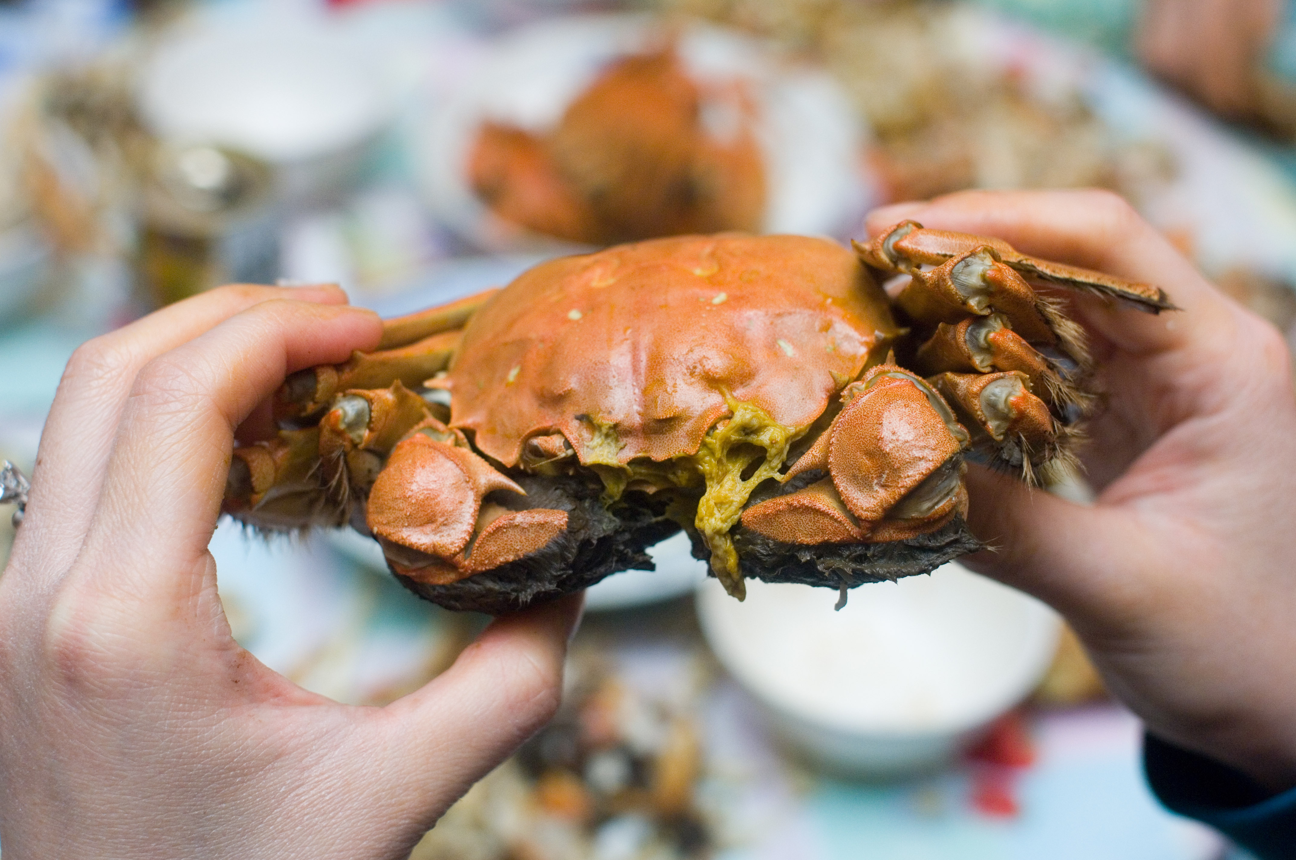 how to freeze a live crab