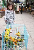 Nara At The Bird Market
