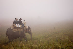 http://www.johnharveyphoto.com/India/CorbettNP/SafariInFog_300W.jpg