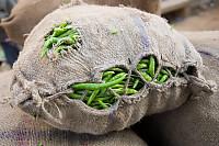 Bag Of Peas Full To Bursting.