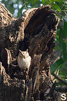 Owl Near Nest
