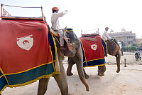 Two Elephants Walking In Fort