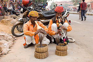 Two Snake Charmers