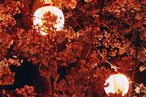 Lanterns In Sakura