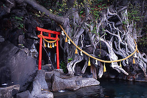 Shrine And Tree In Pool