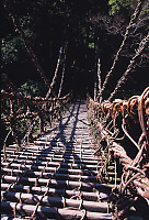 Vine Bridge