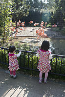 Kids Watching Flamingos