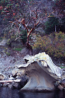 Curved Rock And Arbutus