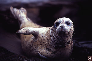 Seal On Slide