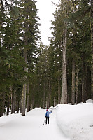 Helen Skiing In Taller Trees