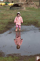 Nara Reflected In Large Puddle