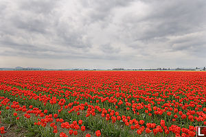 Red Field Dark Clouds