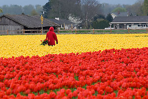 Red Jacket In Field