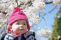 Nara With White         Cherry Blossoms