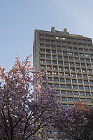 Cherry Blossom With Frank Stanzl Building