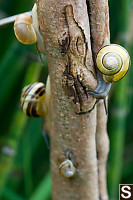 Snails On Trunk