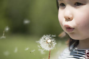Nara Blowing Dandelion Seed Head