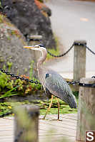 Heron On Bridge