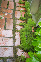 Moss Between Bricks