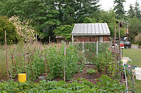 Back Vegetable Garden