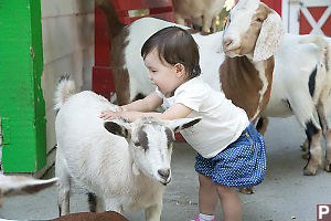 Nara Playing With A Goat