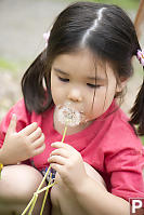 Nara Blowing Dandelion