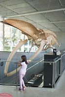 Nara With Blue Whale Skeleton