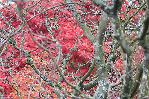 Bare Branches And Colour