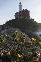 Oregon Gumplant And Fisgard Lighthouse