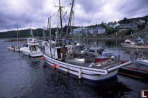 Boats in Bella Bella Harbour