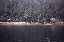 Cabins and Forest - Wallace Bay