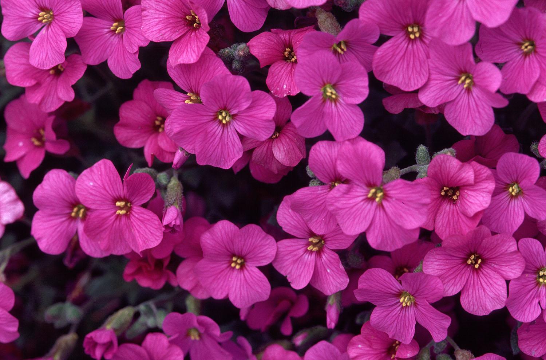 Beautiful Flowes Amazing Beautiful Purple Flowers Photo