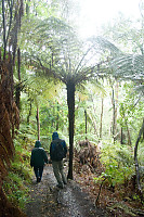 David Mark Walking Under Giant Fern