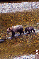 Baby And Mom Walking Toward Log