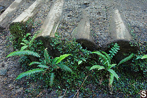 Ferns Growing Next To Road