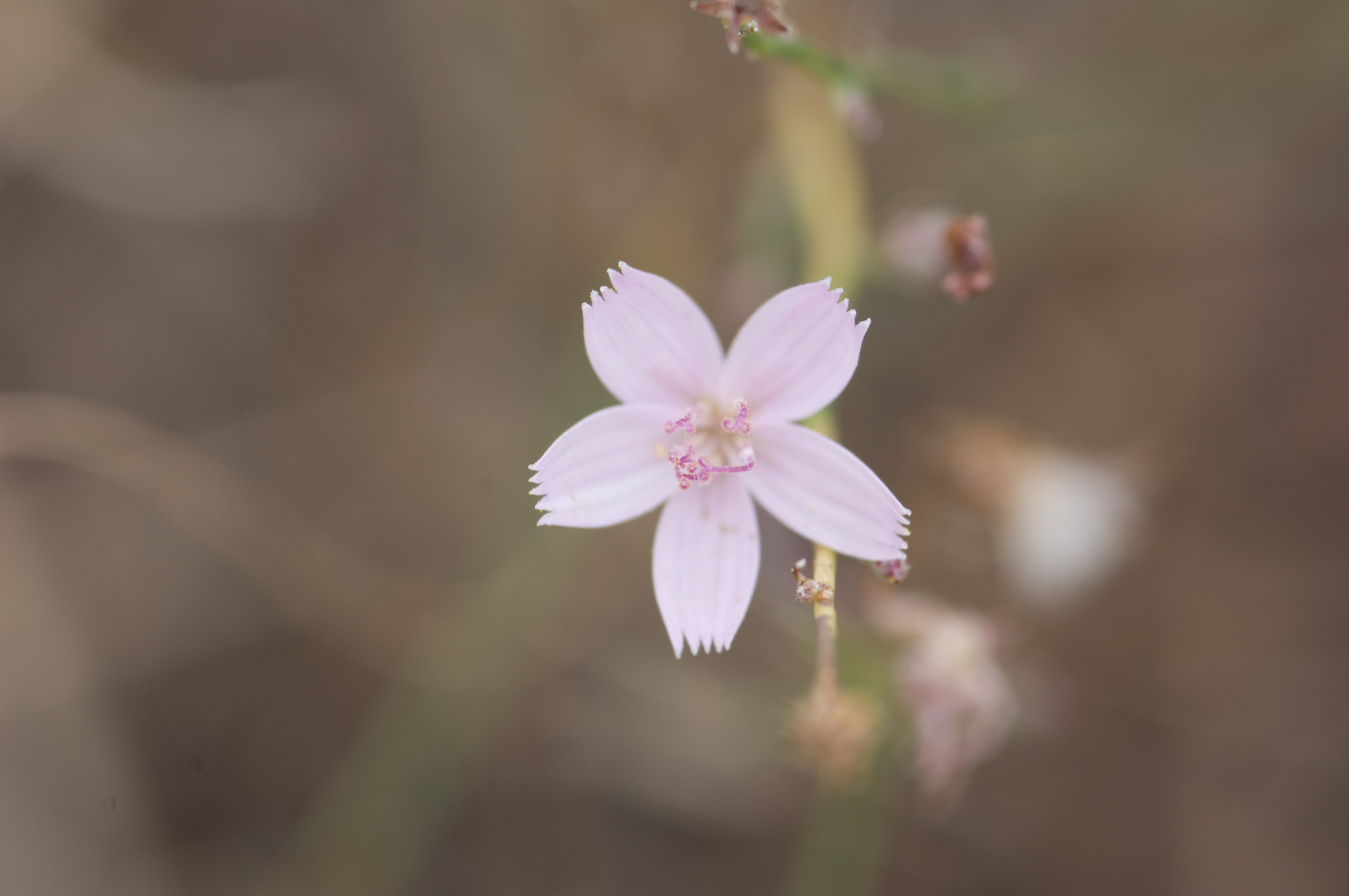 Light Pink Flower