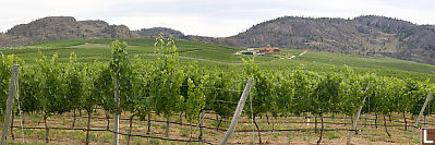 Hillsides Covered In Vines