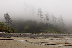 Foggy Trees And Sandy Beach