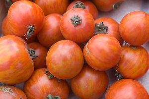 Red Orange Tomatoes