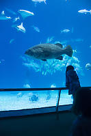 Nara With Giant Grouper